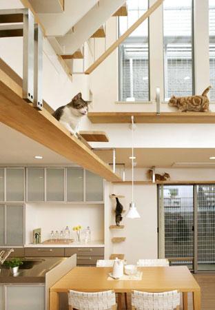 cat01-1.jpg
