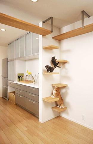 cat01-4.jpg