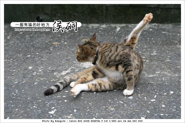 侯硐。一個有貓好地方