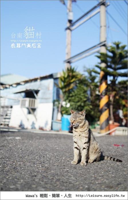 【台南貓村】鹿耳門天后宮騎車去,意外發現小小的貓村啊!