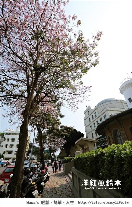 台南氣象局洋紅風鈴木