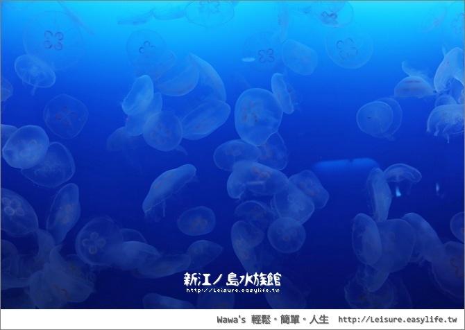 【藤澤】新江之島水族館,精彩的海豚秀,還有許多閃閃發亮的水母