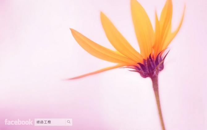Windows 10 桌布下載 wallpaper download