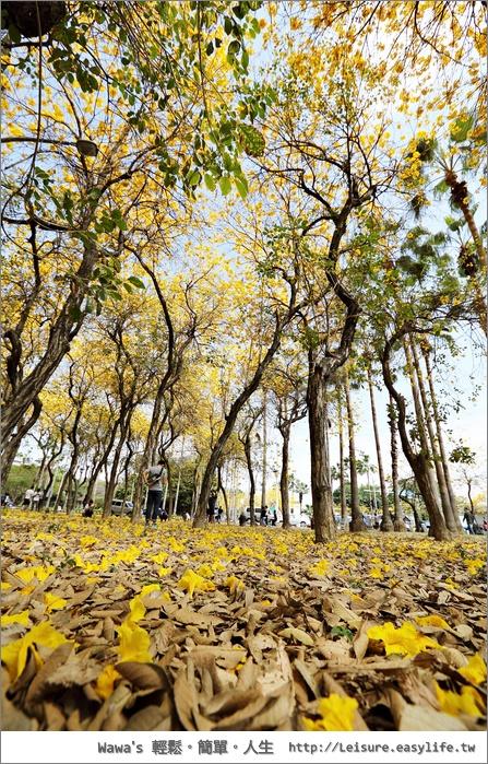台南林森路風鈴木