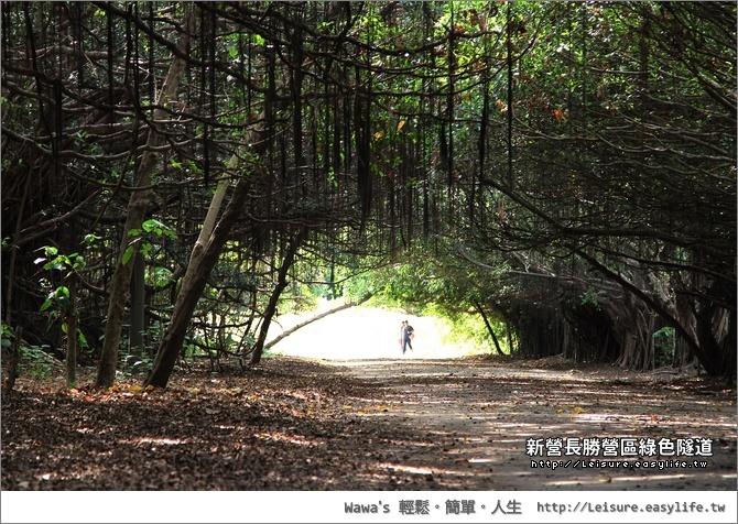 新營長勝營區綠色隧道
