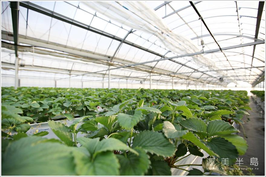 渥美半島草莓吃到飽行程