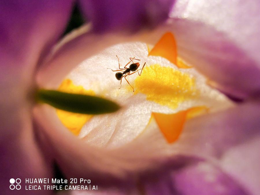 HUAWEI Mate 20 Pro 相機照片