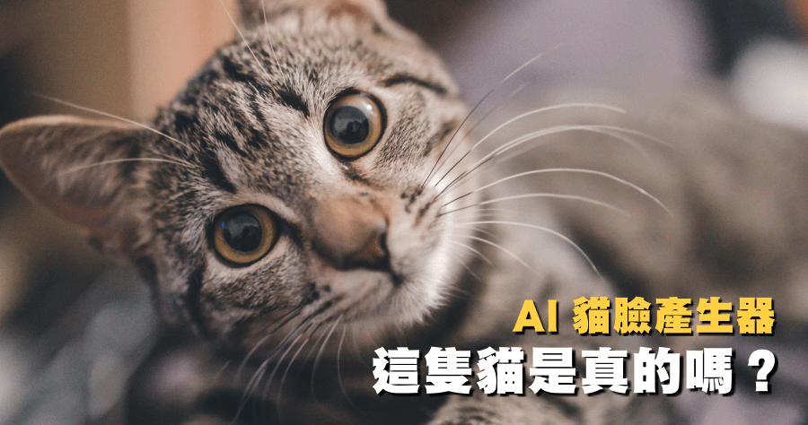 貓咪照片產生器
