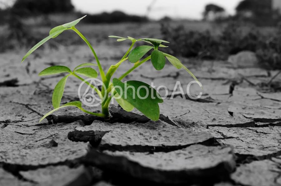 乾旱 植物