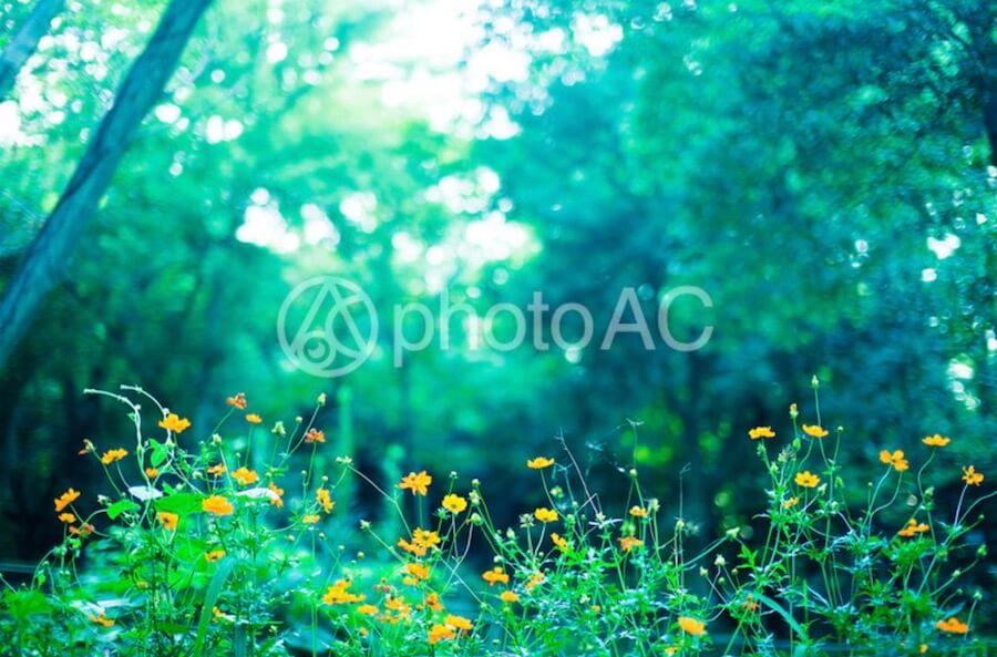 花 黃色 風景