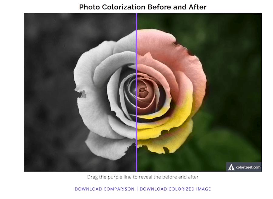 Colorize Black and White Photos algorithmia 效果 黑白花 彩色花 綠色 粉紅色