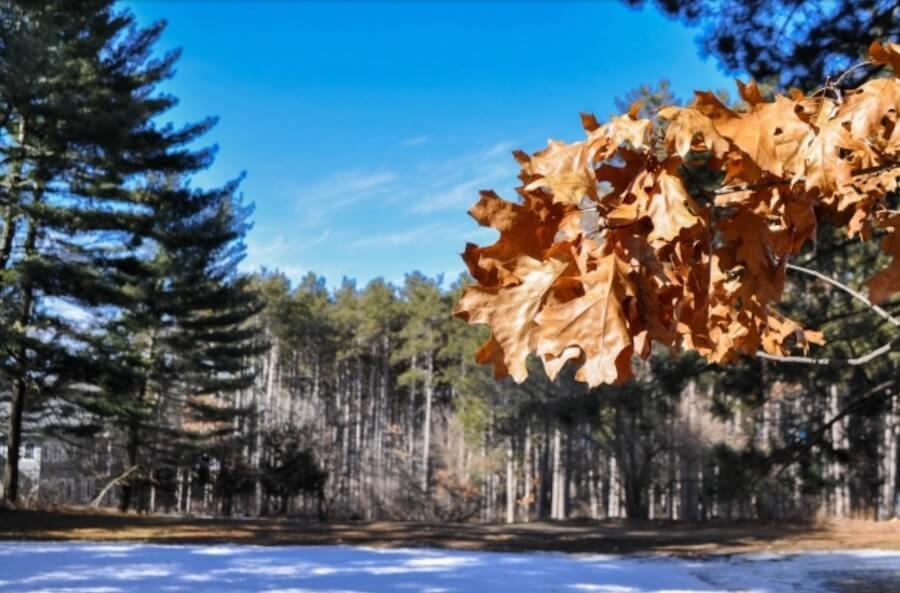秋天 樹 植物 楓葉 橘色