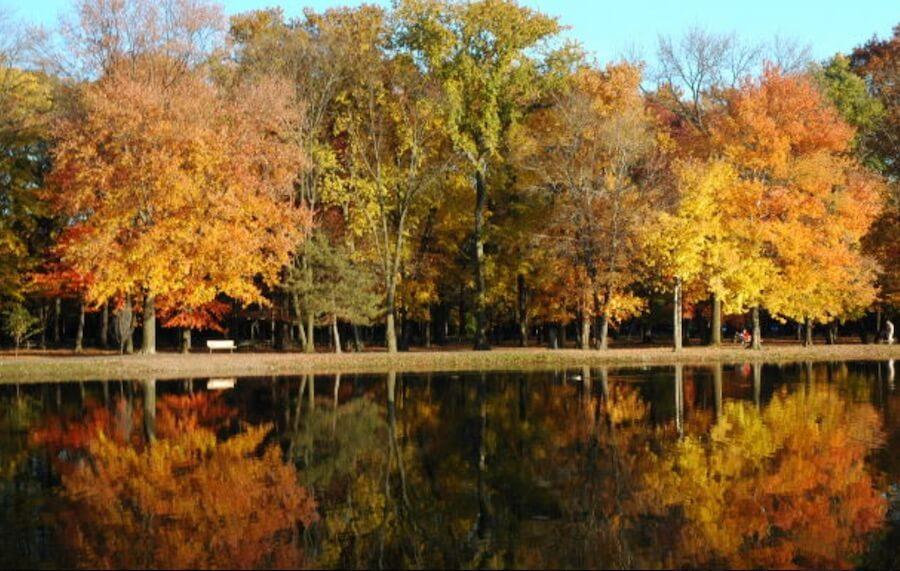 Morguefile 樹 湖 河 倒影 水面 秋天 橘色 楓葉