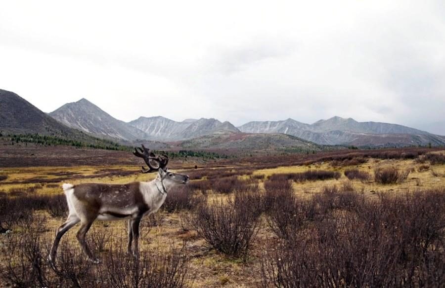 rawpixel 麋鹿 荒野 山 草地 大自然 動物 植物