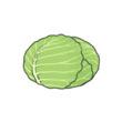 旅行青蛙 高麗菜 食物