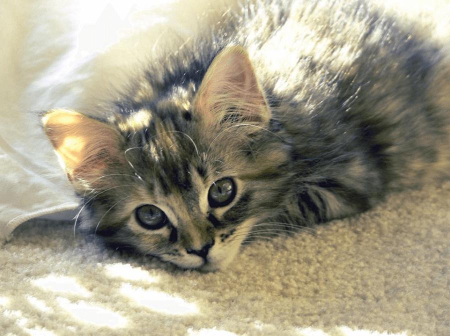 可商用貓咪圖片下載