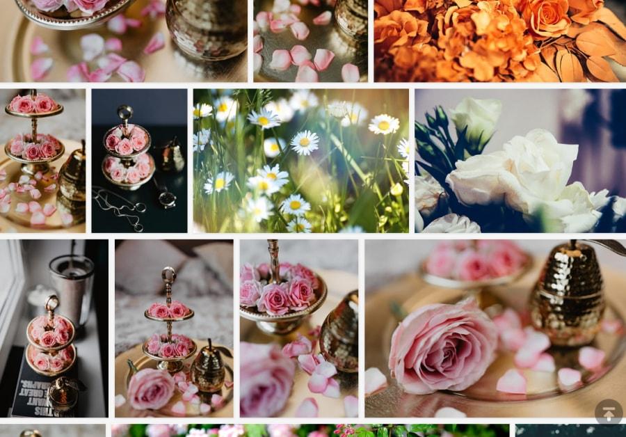 免費可商用花朵圖片下載