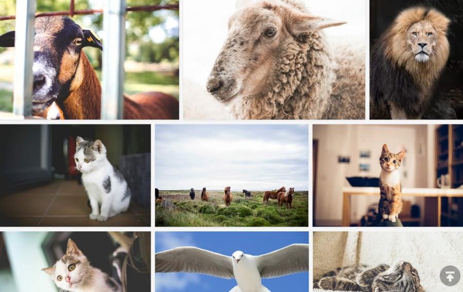 免費可商用動物圖片下載