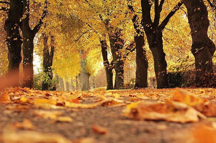 秋天可商用圖片下載